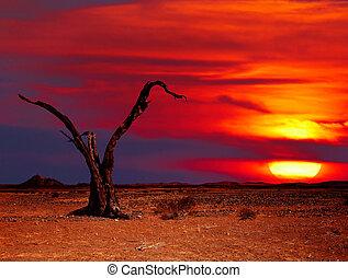 사막, 공상