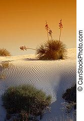사막, 일몰