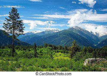 산, 그루지야, 조경술을 써서 녹화하다, 자연