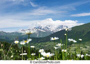 산, 꽃, 조경술을 써서 녹화하다, valley., 자연