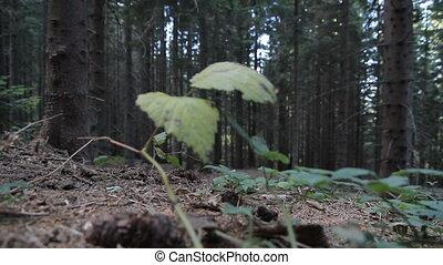 산 바이시클리스트, 구, 에서, 나무
