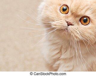 상세한 묘사, 고양이