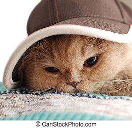 상세한 묘사, 모자, 착용, 고양이