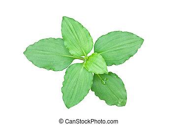 상세한 묘사, 잎, 고립된, 녹색의 배경, 백색