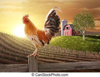 새로운 농장, 아침