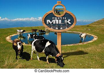새로운 우유, -, 멍청한, 표시, 와, 목초, 암소
