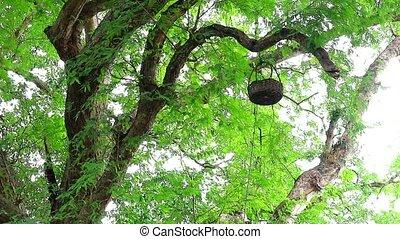 새, 걸는, 과일, branches., 바구니, 가져오다, 다람쥐