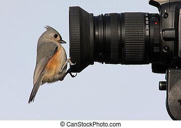 새, 통하고 있는, a, 카메라