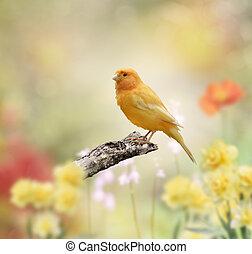 새, 황색