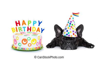 생일, 개, 행복하다, 잠