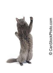 서 있는, 고양이, 다리, 암사슴