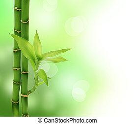 선, 대나무