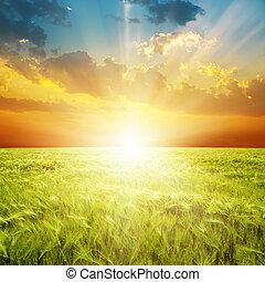선, 위의, 들판, 녹색, 오렌지, 일몰, 농업