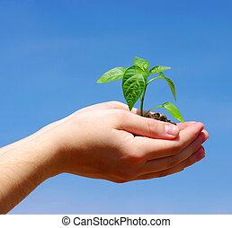 성장하는, 녹색의 식물