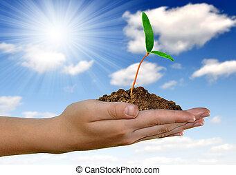 성장하는, 녹색의 식물, 에서, 손