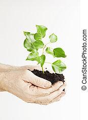 성장하는, 녹색의 식물, 에서, a, 손