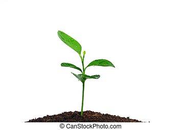 성장하는, 식물
