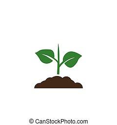 성장하는, 실생 식물, 아이콘, 벡터, 농업, 녹색 나무