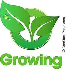 성장하는, 은 잎이 난다