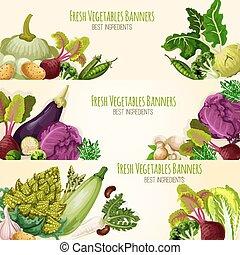 세트, 야채, 벡터, 채소, 신선한, 배너