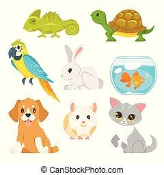 세트, 의, 가정, 동물, 애완 동물