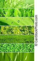 세트, 의, 배너, 와, 녹색의 잎, 직물
