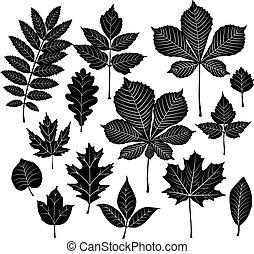 세트, 의, 실루엣, 잎