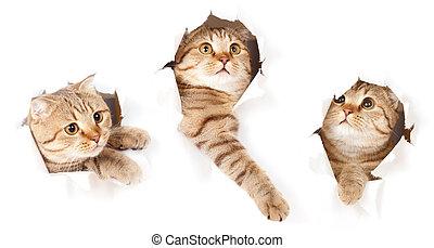세트, 의, 하나, 고양이, 에서, 종이, 쪽, 찢는, 구멍, 고립된