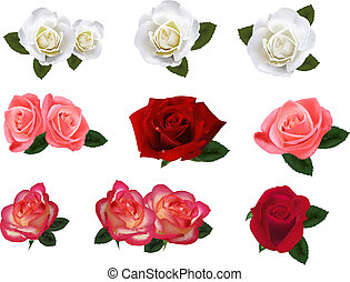 세트, roses., 크게, 아름다운