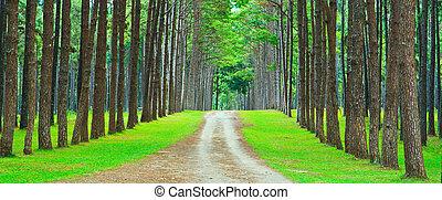 소나무 숲, 길