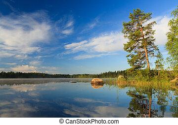 소나무, 얼마 만큼, 그만큼, 호수, 에, 아침