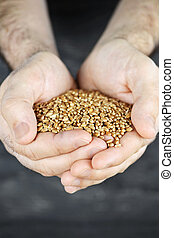 손, 보유, 곡물