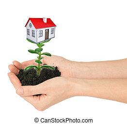 손, 보유, 식물, 와, 집