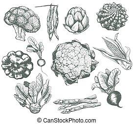 수집, 벡터, 야채, 밑그림, 삽화