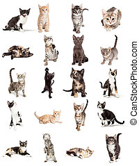 수집, 의, 귀여운, 새끼고양이, 고립된, 백색 위에서