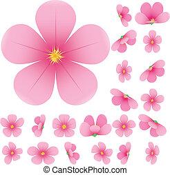 수집, 핑크, 세트, 버찌, 삽화, 벗나무, 꽃, 꽃