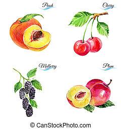 수채화 물감, 장과, 과일