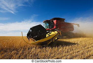 수확, 밀
