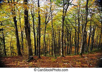 숲, 나무, 가을, 배경