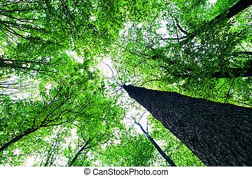 숲, 나무