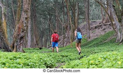 숲, 동안, 나름, 걷기, hikers, 배낭