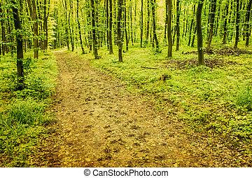 숲, 배경