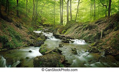 숲, 폭포