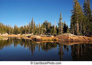 숲, 호수 반사