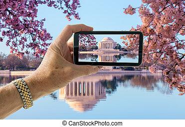 스냅 사진, 의, 벚꽃, 에서, 워싱톤 피해 통제