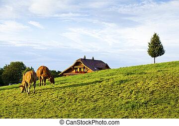 스위스어, 농장, 에서, kriens, 시골