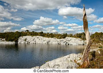 스코틀랜드 말, 소나무, 에, 호수 기슭