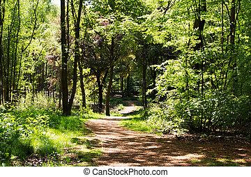 시골, 걷다, 와, 좁은 길, 우여 곡절, 완전히, 나무