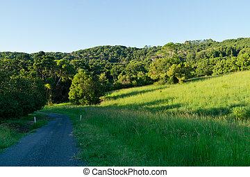 시골, 길, 에서, 늦게, 여름, 오후
