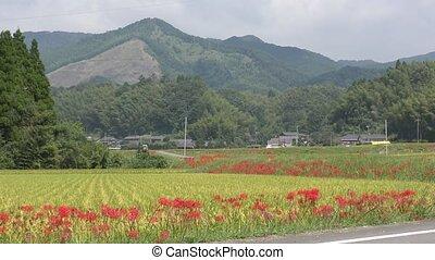 시골, 꽃